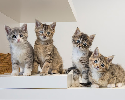 Supplies You Need For Fostering Mother Cats And Kittens