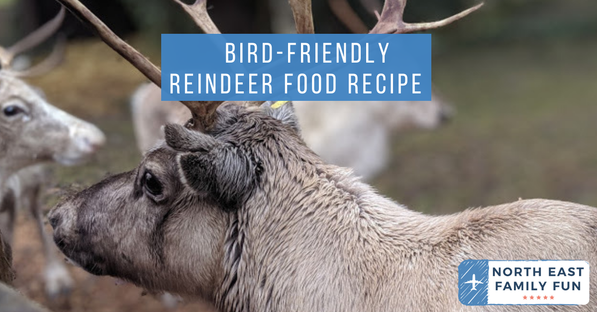 Bird-friendly Reindeer Food Recipe