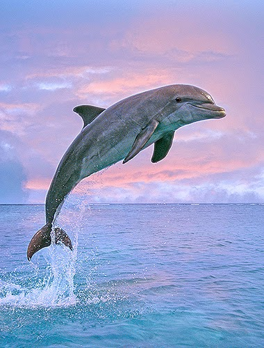 baby dolphin images
