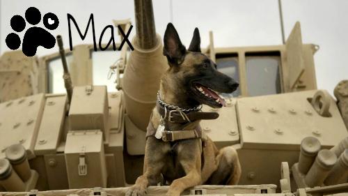 max-2015-marines-dog