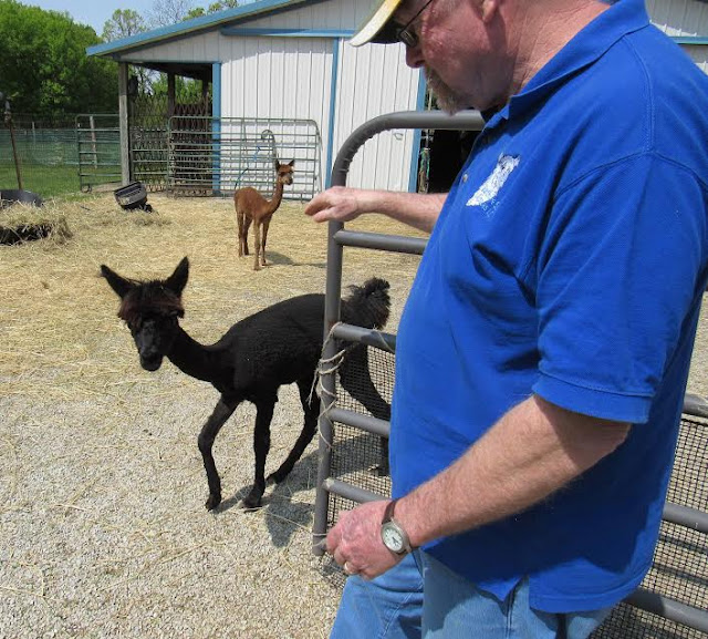 Earthcare Suri Alpacas in Rochester, Wisconsin