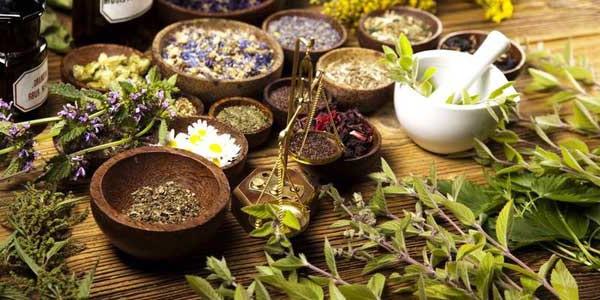 факт про медицинские растения которые растут в тропическом лесу