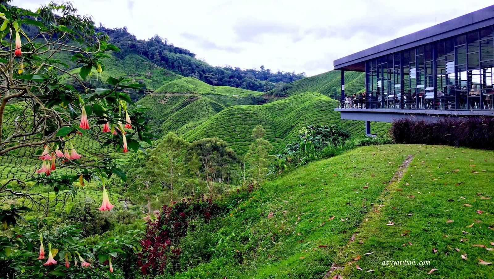 Review Ladang Teh Boh Sungai Palas Boh Tea Centre Azyyati Liah