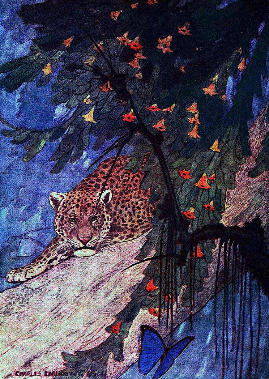 "a Charles Livingston Bull illustration for ""Under the Roof of the Jungle"" 1911, a jungle leopard"