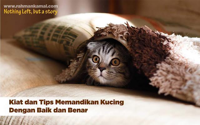 Kiat dan Tips Memandikan Kucing Dengan Baik dan Benar
