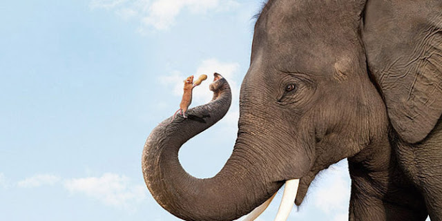 Mungkinkah Ada Semut Sebesar Gajah atau Gajah Sebesar Semut?