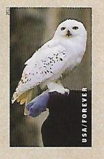 Selo Coruja Hedwig