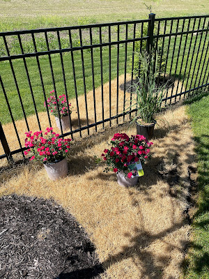 arranging plants in new bed shape