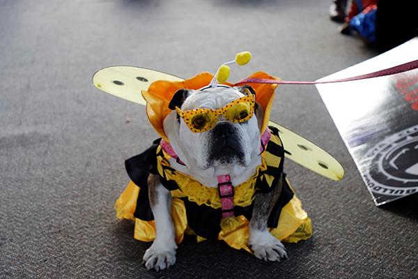 Desfile-Halloween-Mágico-sexta-versión-Expopet-moralejas-corferias-animales-mascotas