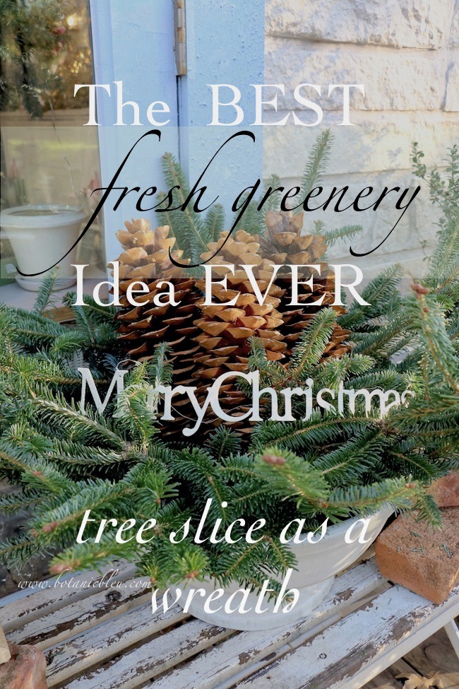 The best ever idea for Christmas greenery is to cut a slice in the middle of a fresh tree to use as a wreath