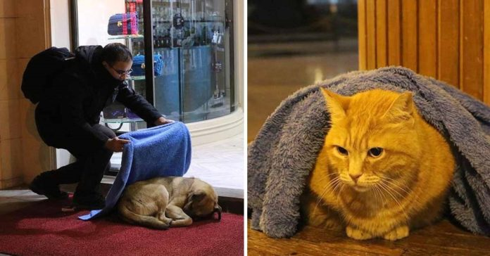 Dentist spends his free time tucking homeless dogs and cats