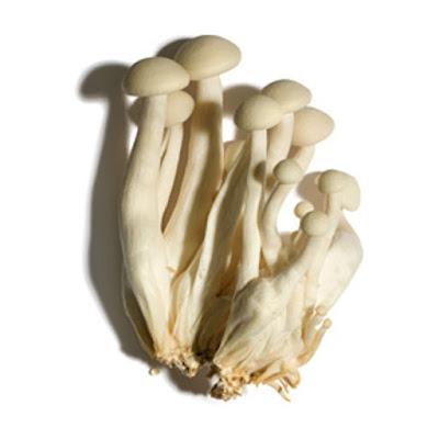 Mushroom Supplier Company in Jodhpur