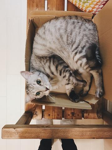 荒ぶるサバトラ猫