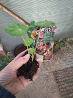 coger la planta con cuidado