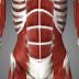 Qué es el CORE Ejercicios abdominales y zona media, cómo adelgazar perder grasa y definir abdomen