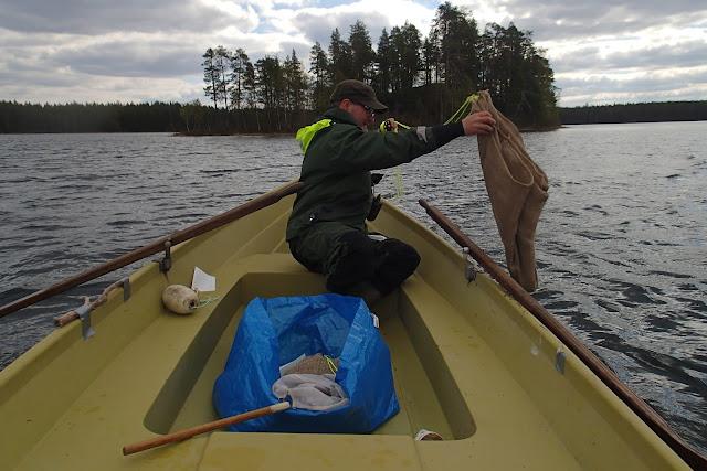 Pelastautumispukuinen henkilö soutuveneessä nostaa vedestä perunasäkkiä