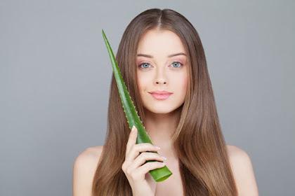 Resep Obat Herbal dari Lidah Buaya - Manfaat dan Khasiat Lidah Buaya untuk rambut dan kulit Kepala