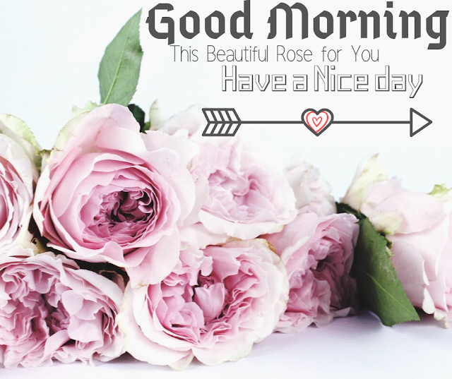 Good Morning Images with White Rose