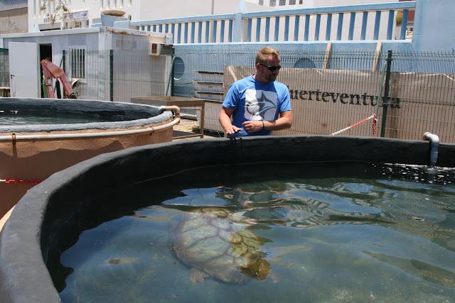 Meeresschildkröten Aufzuchtstation Fuerteventura 04