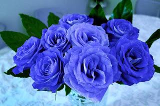 blue-rose,www.healthnote25.com