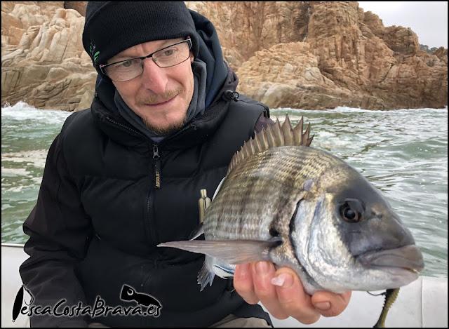 sargo sakura gobygo pesca costa brava jjpescasport - TRAS EL TEMPORAL... SARGOS!