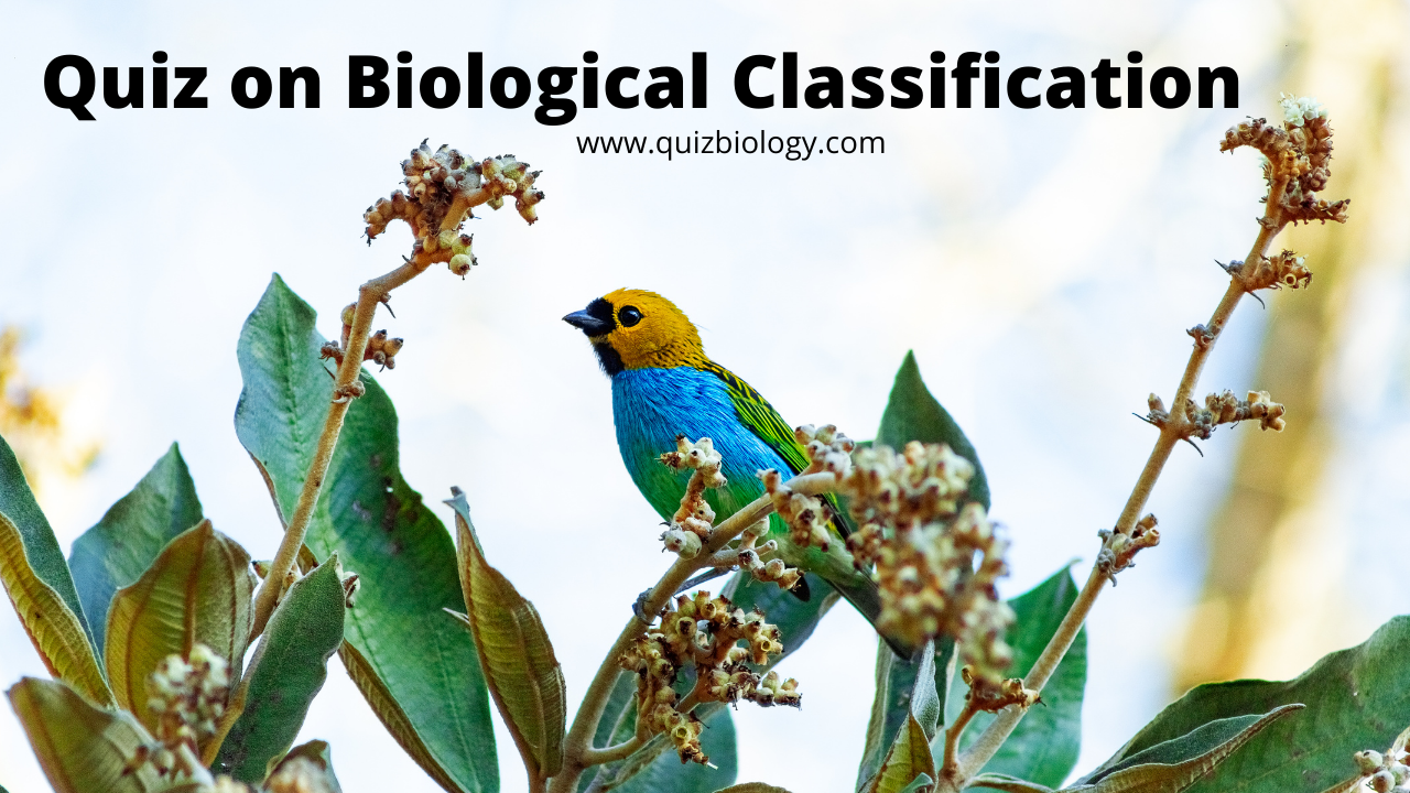 Multiple Choice Quiz on Biological Classification