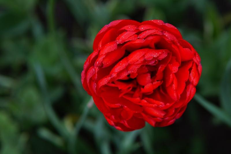 kevätkukat, toukokuu, puutarha,