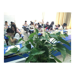 picture of  a busy classroom with a plant in the foreground and blurred faces of students behind it