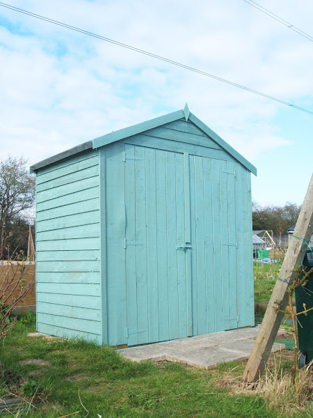 our freshly painted sky blue allotment shed