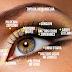 Divisão das Áreas dos Olhos na Maquiagem