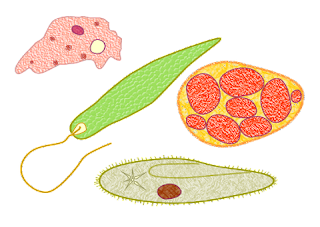 protozoa-www.healthnote25.com