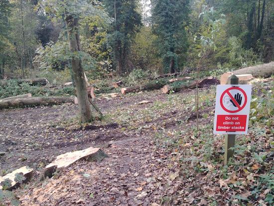 Tree felling underway in Gobions Wood