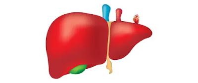 كيف تحافظ على صحة الكبد؟