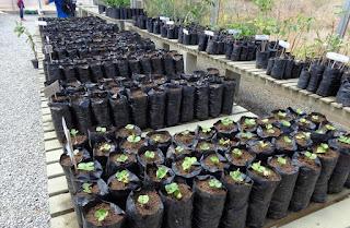 Projeto intensifica a produção e plantio de árvores nativas da caatinga em Cuité