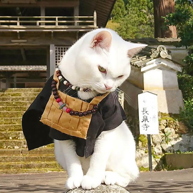 Đối với những du khách hiện đang ở Kyoto hoặc đang lên kế hoạch cho một chuyến đi tới đó trong tương lai gần, bạn có thể tìm thấy Đền Meo Meo tại địa chỉ này: 520 Yasekonoecho, Sakyo-Ku, Kyoto 601-1253, Quận Kyoto, Nhật Bản.