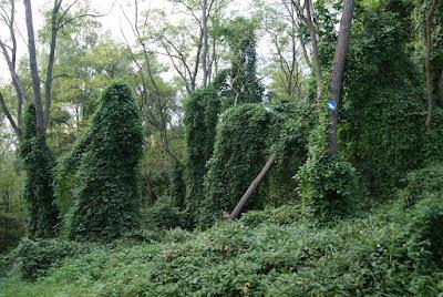 Baumstämme, die komplett, von oben bis unten, mit Blättern behangen sind.