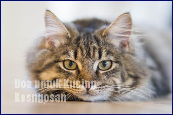 Doa Kucing Peliharaan yang Meninggal dalam Islam