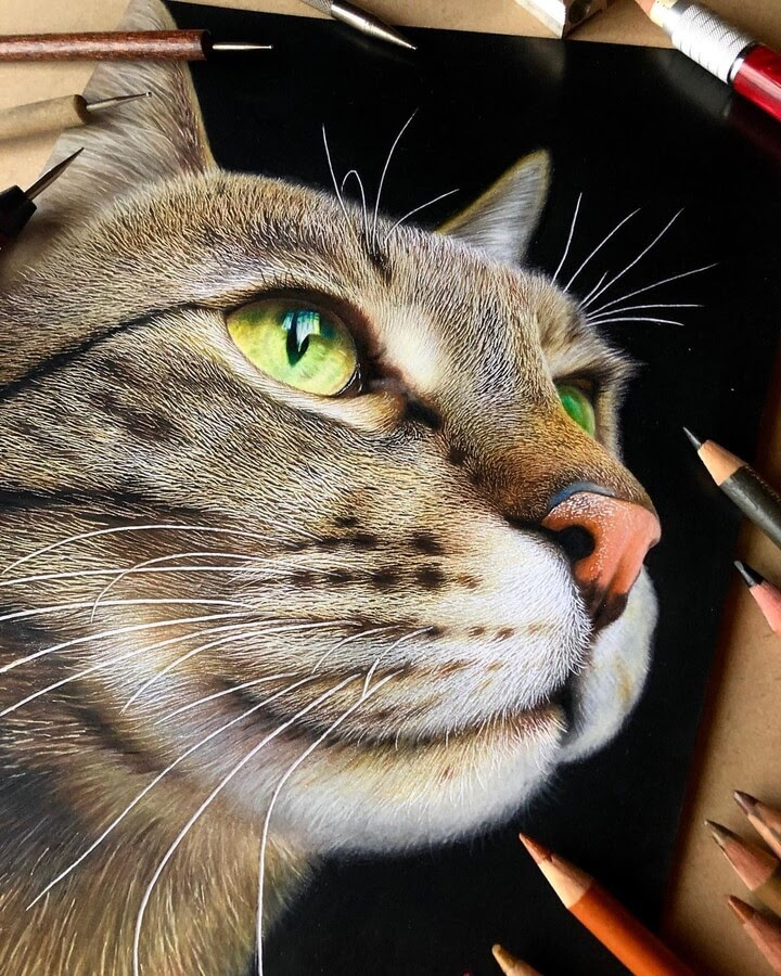 09-Cat-with-green-yellow-eyes-Haruki-Kudo-www-designstack-co