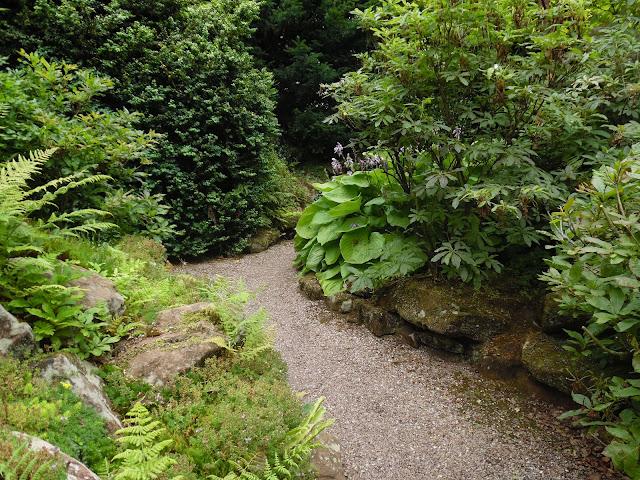 ogród leśny, ogród w cieniu, żwirowa ścieżka