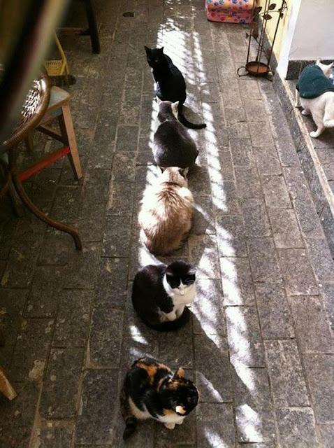 20 ông mèo lười cả ngày chẳng làm gì chỉ thích đi sưởi nắng