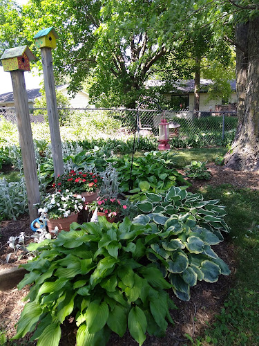 Hostas and inpatiens