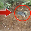 Banyak Yang Belum Tahu.Jika Anda Kucing Diatas Kuburan, Berarti Ada 3 Pertanda Ini Dari Allah