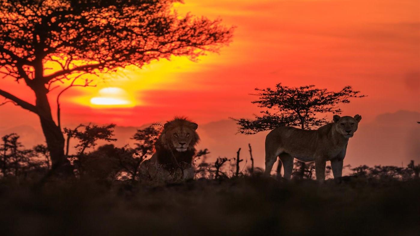 Download National Geographic Safari PREMIUM, Tema per Windows 10