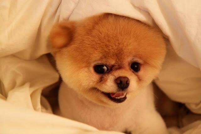 Resultado de imagen para perritos