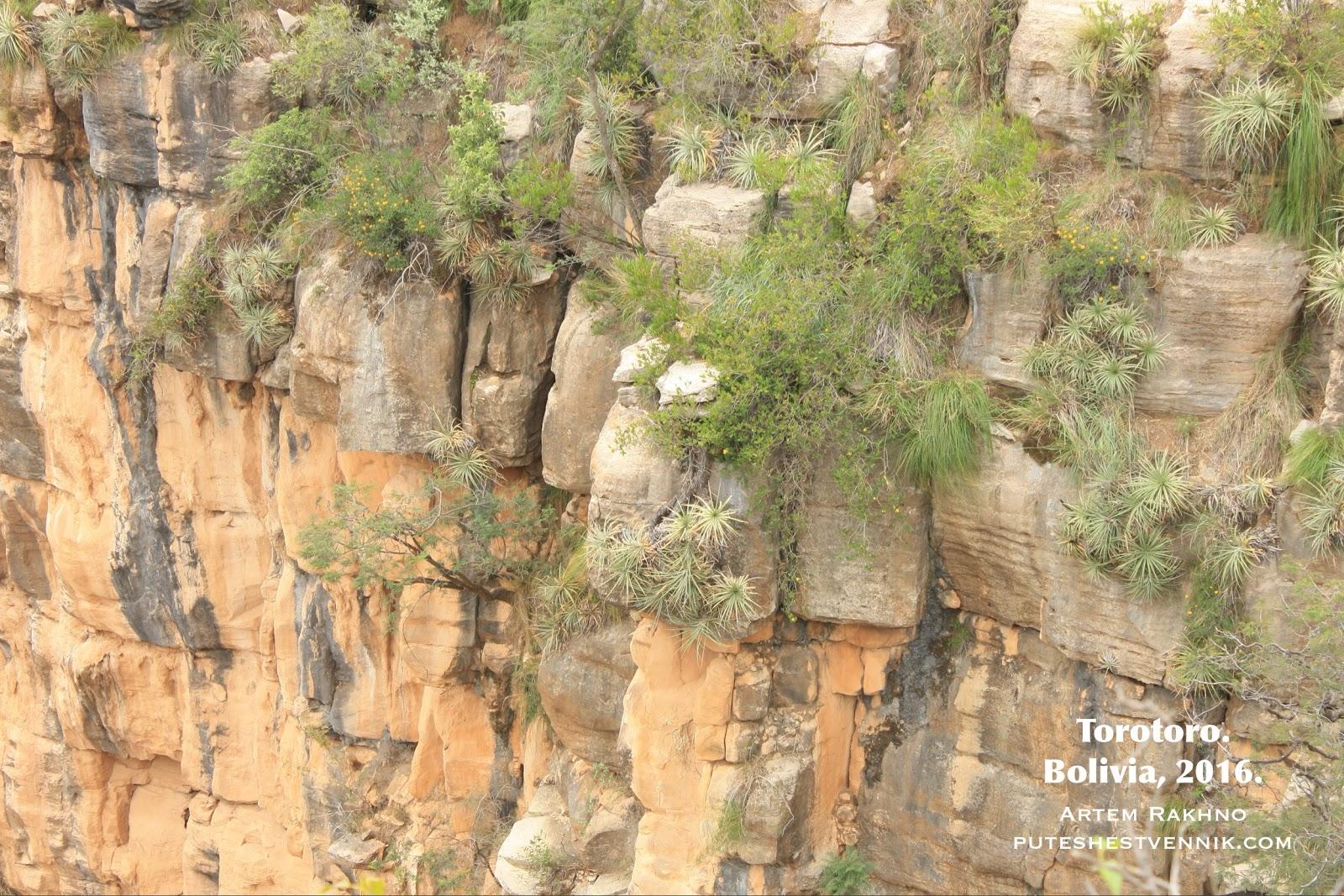 Скала и кустарники