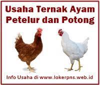 Peluang Usaha Ternak Ayam Petelur dan Ayam Potong, Serta ...