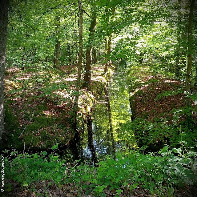Canaux de la mare aux Evées, Forêt de Fontainebleau, (C) 2014 Greg Clouzeau
