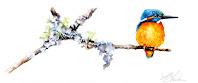 #oiseau aquarelle#watercolorbird#martinpecheur#watercolorillustration