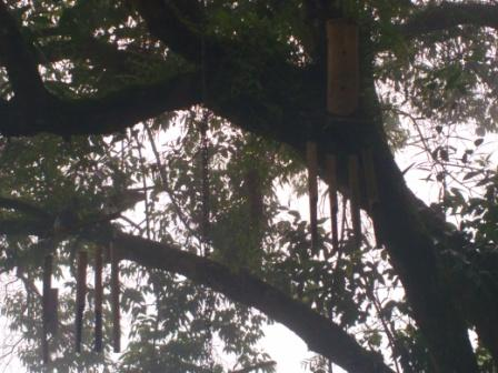 Honey Bee Tree in Munnar