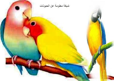 تربية العصافير,تربية,الطيور,تربية الطيور,عصافير,عصافير الزينة,محترف الطيور,تدريب الطيور,انواع العصافير,العصافير,طيور الحب,الكناري,طيور الزينة,البادجي,تربية عصافير الزينة,حكم تربية عصافير الزينة